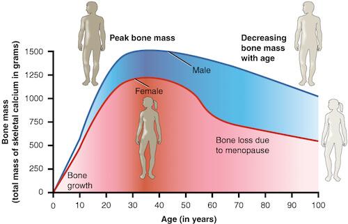 Masse osseuse homme femme suivant l'age